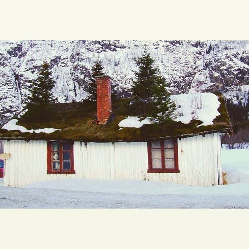 The house with trees on the roof Cottage Norway Visit_norway Nature_pd Nature Nature_up_close Fotofanatics_nature_ Rsa_nature 5foru