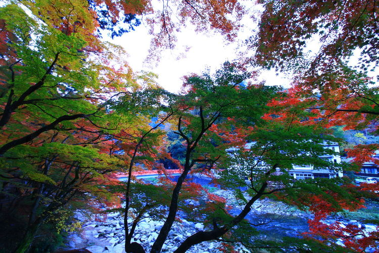 紅葉 紅葉2016 EyeEm Gallery EyeEm Best Shots Enjoying Life Canon EOS 70D 写真撮ってる人と繋がりたい 写真好きな人と繋がりたい ファインダー越しの私の世界 Canon 70d Nature Beauty In Nature Flower Light And Shadow