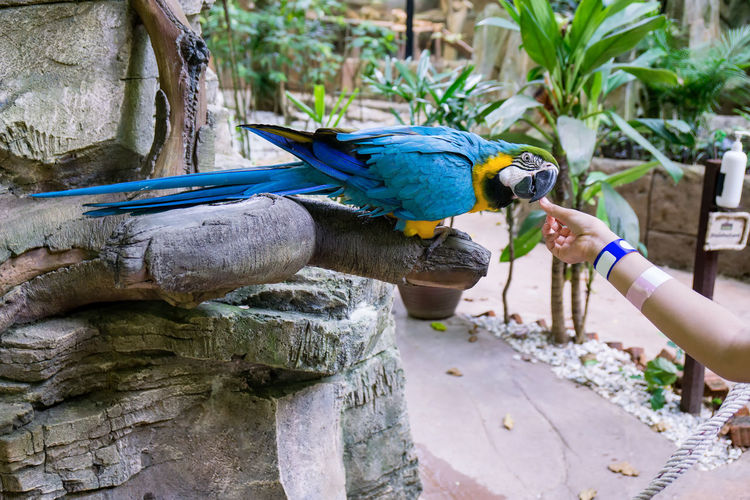 Feeding a colorful parrot with sunflower seed Animal Themes Animal Wildlife Animals In The Wild Bird Feeding  Focus On Foreground Gold And Blue Macaw Human Body Part Human Hand One Animal One Person Outdoors Parrot Perching Real People