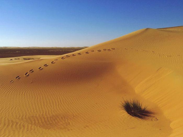 Deserts Around The World in Al Ain, United Arab Emirates