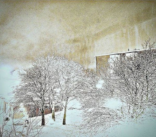 📷❄ Snowing Snow Gothenburg GBG Coldweather Snowweather Trees White Nightshot Nikon Photo Pic Picture Likes Tagsforlikes Sweden Followme Lotofsnow Hisingen Goteborg Sverige Snö  @awesome_pixels @exaperture @swedenimages @gothenburg_sweden