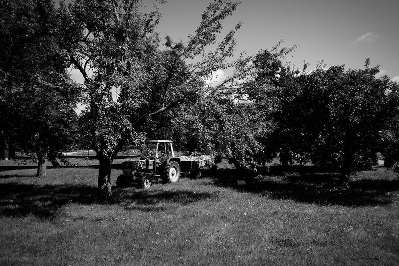 Austria Lavanttal Harvest Apples Trees Blackandwhite Nature Farm Life Endofsummer September