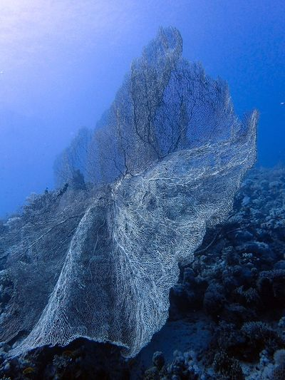 Fragile giant Fragility Coral Sea Underwater UnderSea Water Sea Life Nature Beauty In Nature