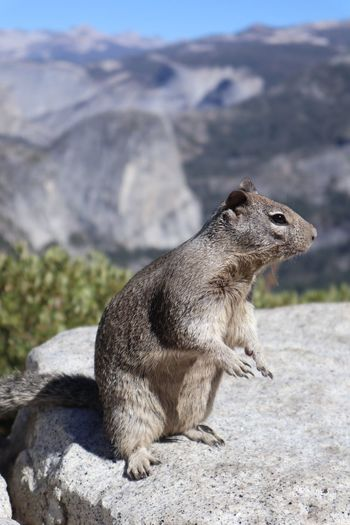 Yosemite First