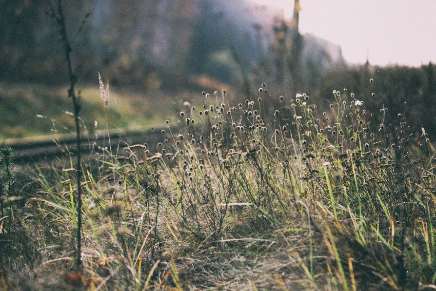 Plant Growth Nature Beauty In Nature No People Field Tranquility