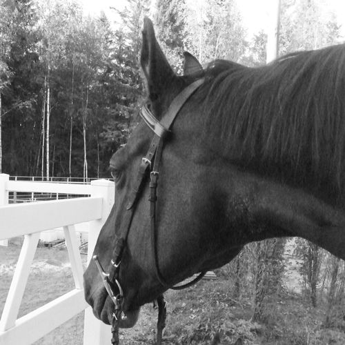 Old Pic  Stearing At My Future Taking Photos Stallion