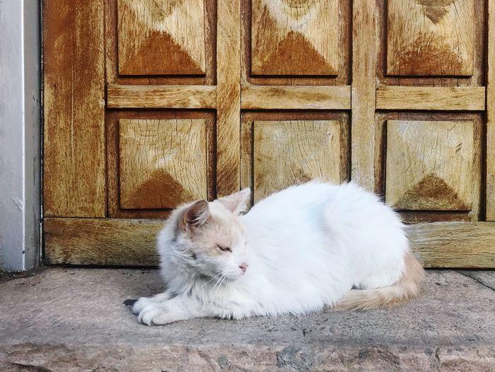 Cat Cats Of