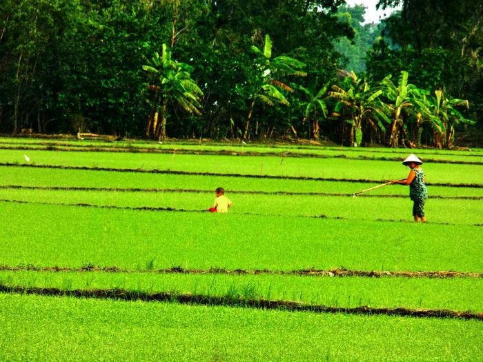 People in grassy field