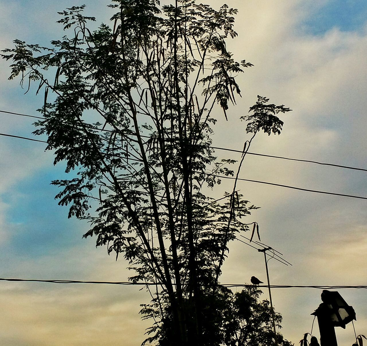 tree, sky, cloud - sky, low angle view, silhouette, growth, cable, nature, outdoors, beauty in nature, real people, scenics, day, men, telephone line, one person, people
