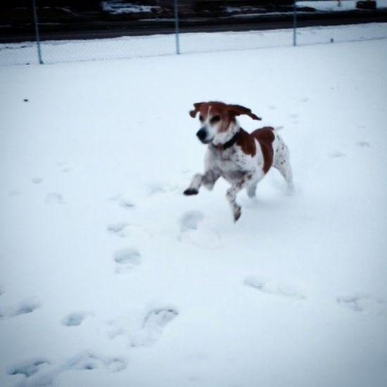 Nola loves running free