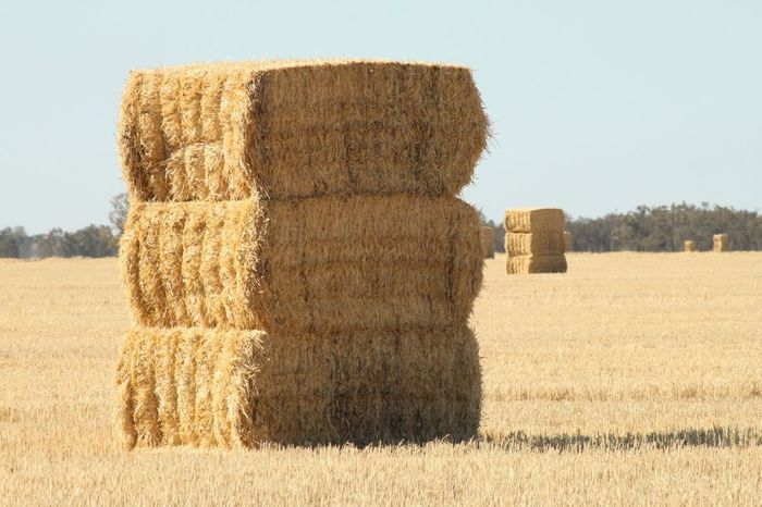 Haystack Rural Scenes Countryside Landscape Australia 43 Golden Moments Paint The Town Yellow