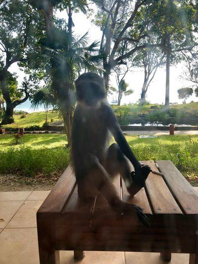 Monkey Tree Animal Themes Day One Animal Sitting Mammal