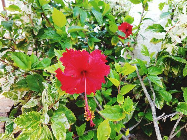 Hermosa flor Flor