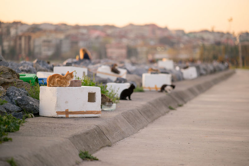 Stray Cats have homes made of foams with a seaview and access to the beach :) Cat Cat House Cats Cat♡ City Cityscape Empty Empty Places Focus On Foreground Istanbul Istanbul Turkey Istanbullovers Natanomalous Natanomalous.com 43 Golden Moments Outdoors Seascape Seaside Selective Focus Stray Cat Sunlight Sunset Fine Art Photography The OO Mission The Architect - 2016 EyeEm Awards Pet Portraits