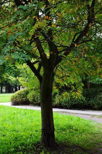 Tree Greens Parkland EyeEmNewHere The Great Outdoors - 2018 EyeEm Awards