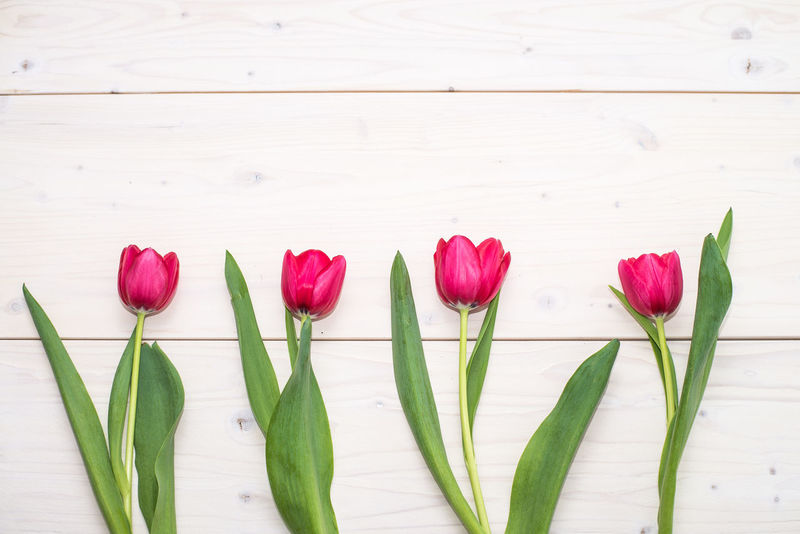 Beauty In Nature Close-up Day Flower Flower Head Fragility Freshness Indoors  Nature No People Petal Plant Red Spring Spring Flowers Spring Time 🌻 Tulip Tulips Tulips🌷 Wodden Texture Wood Wood - Material