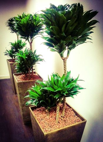 Indoor plants, busy big town office. Plants Indoors  Modern Office Design Trendy Leaves Office Plants Manchester