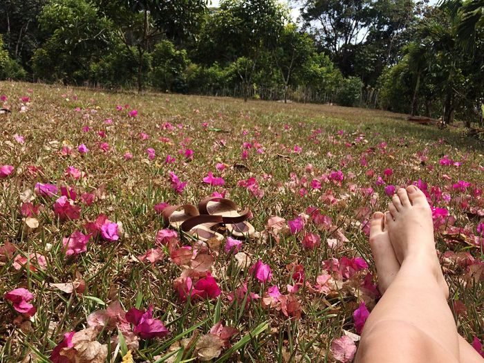 Flower Growth Nature One Person Human Body Part Beauty In Nature Plant Petal Freshness Fragility Day Outdoors Flower Head Tree People