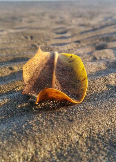Beach Sea Life