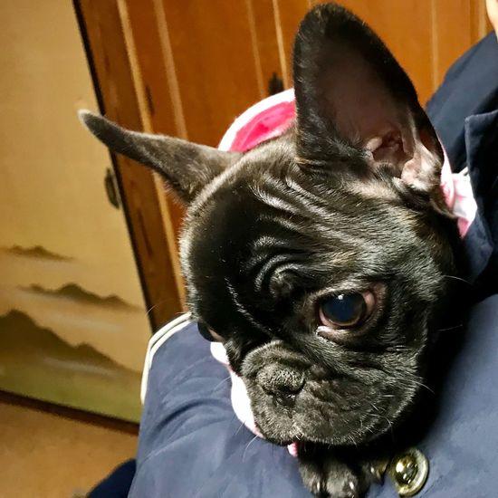 Mammal One Animal Domestic Animals Domestic Pets Vertebrate Canine