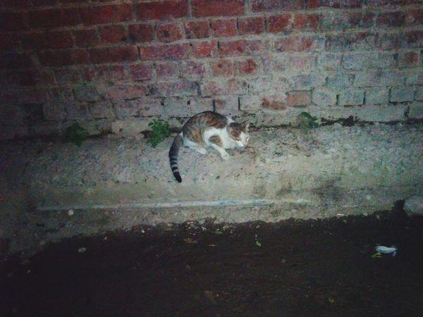 !!Street cat Animal Photography !!