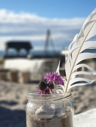 Close-up of purple flowering plant at beach against sky