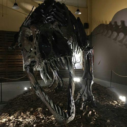 Museum Nature Animal Themes One Animal JudGirsan Dino Dinosaurier  Dinosaurier  Dinosaurs Dinosaur Domestic Animals