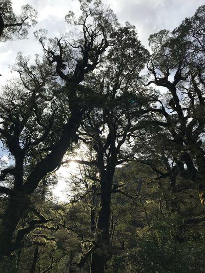 TreePorn Trees