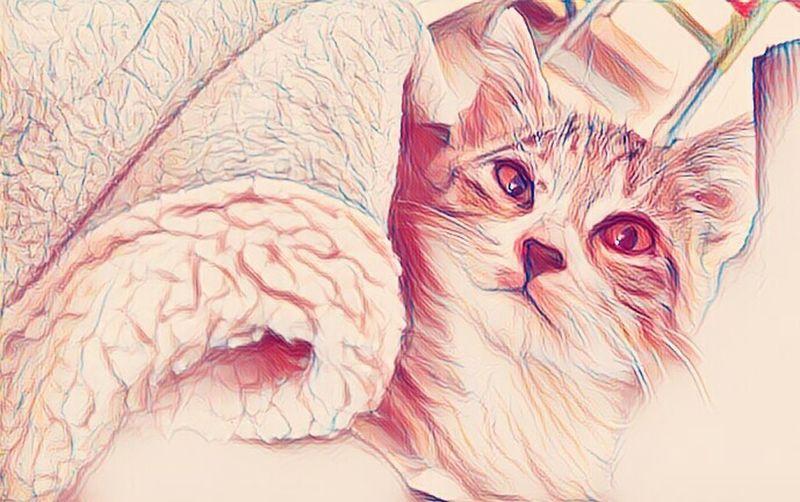 Cats 🐱 Cats