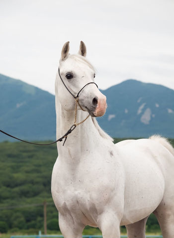 Animal Animal Body Part Animal Themes Day Domestic Animals Horse Mammal No People One Animal Outdoors Pets Sky White Color