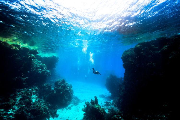 Scuba diver swimming in red sea