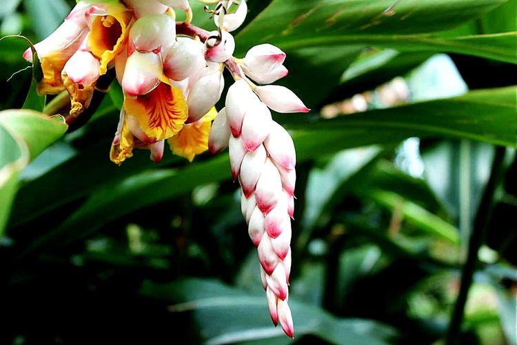 Streamzoofamily Tadaa Community Taking Photos Vacation Wild Flowers Tropical