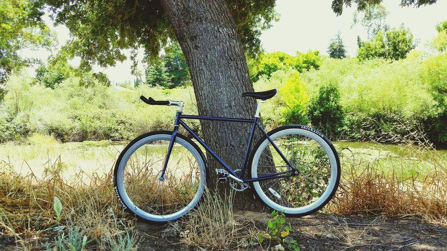 Fixie Bikes Pure Fix