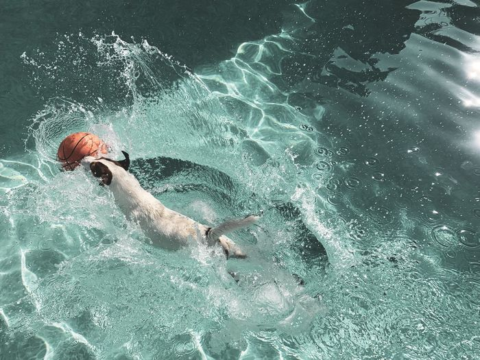 Dog plunging into water going after a basketball