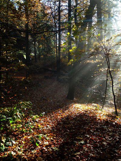 Morgensonne am Waldsteingipfel. Nature Fichtelgebirge Waldstein Sun Sunrise Natural Beauty