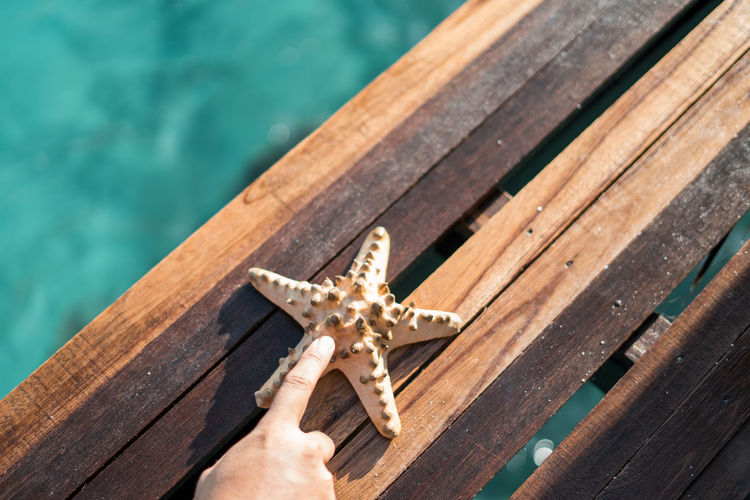 Cropped hand pointing towards starfish on boardwalk