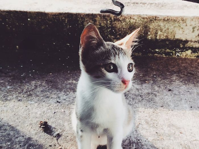 """Buttercup😜😍😍~""""if there were to be a universal sound depicting peace,I would surely vote for PURR"""" Cats😍 Pets Close-up Lovingeachmoment Pet Photography  Love First Eyeem Photo Purrfect Purrdiaries Cats Of EyeEm EyeEmNewHere"""