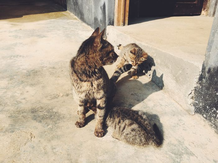 Animal Animal Themes Pets High Angle View Mammal Vertebrate Domestic Cat Domestic Cat Day Sunlight