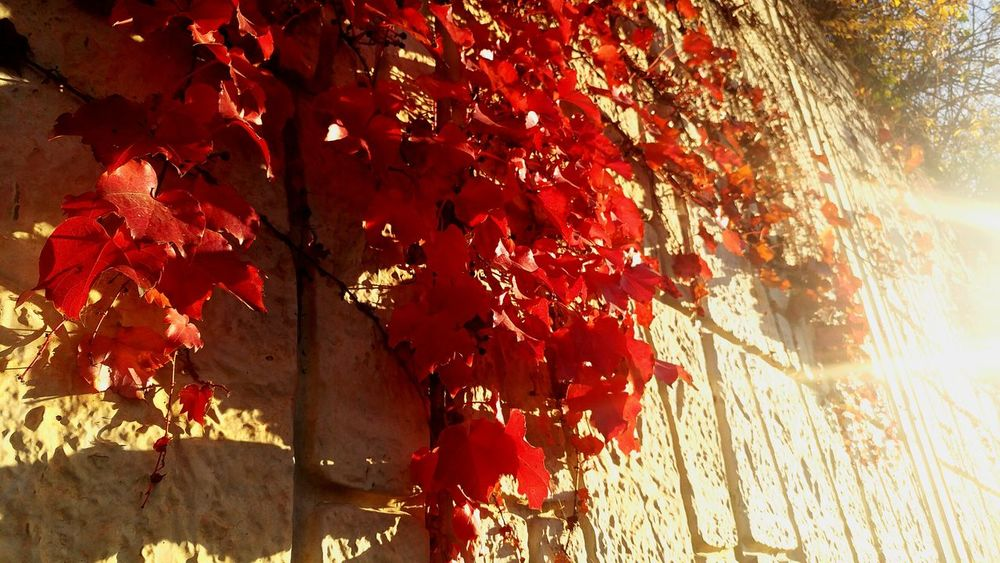 Leaves Shadow Autumn Leaves Shadows & Lights