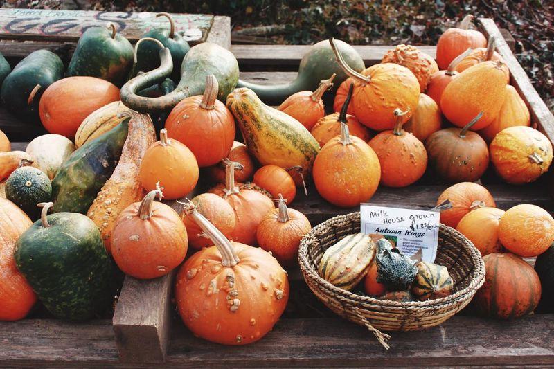 Autumn Fall Fall Beauty Pumpkin Pumpkins Ghords Autumn Collection Bucks County  Pennsylvania
