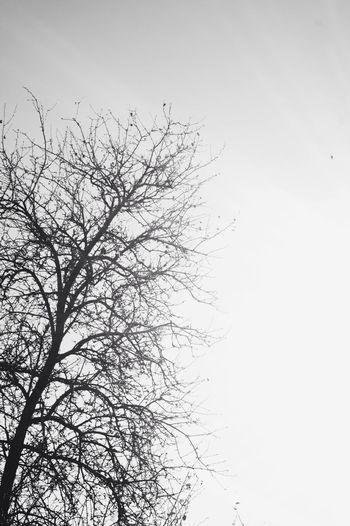 Hugging A Tree Blackandwhite Vscocam Hello World