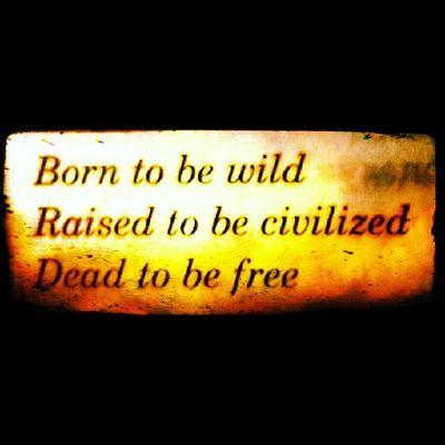 Hakangünday Borntobewild Wild Daha Burn Kitap Book Dead Tobefree