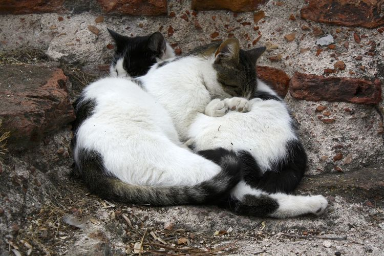 Two cats sleeping outdoor