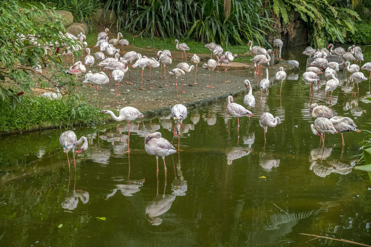 View of birds in lake