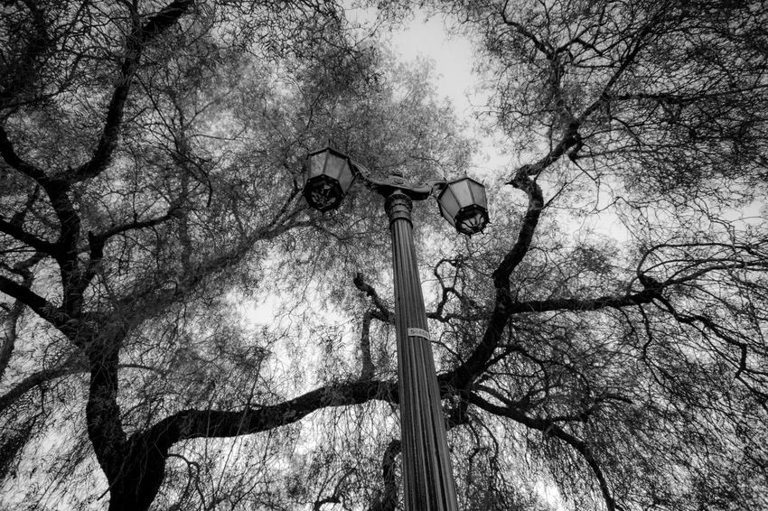 Santiago, Chile | Street Views Santiago De Chile Tree Plant Low Angle View Branch Lighting Equipment No People Nature Street Light Day Outdoors Street Sky Tree Trunk Technology Electricity  Electric Lamp Old