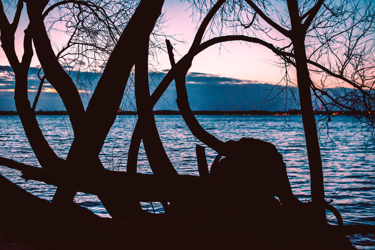 Tree Water Branch Bare Tree Plant Tranquility Beauty In Nature Sky Nature Tranquil Scene Scenics - Nature Outdoors Silhouette Sea Day Tree Trunk Trunk Leisure Activity Sunset Bluehour Shore Edge