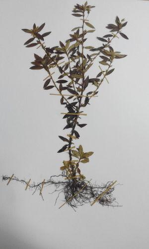 Flower Biology Specimen Naturelovers Leaf Exsicata