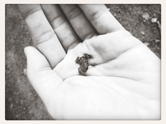 mini Frosch in meiner Hand Taking Photos Get A Walk Wood Animals Frog