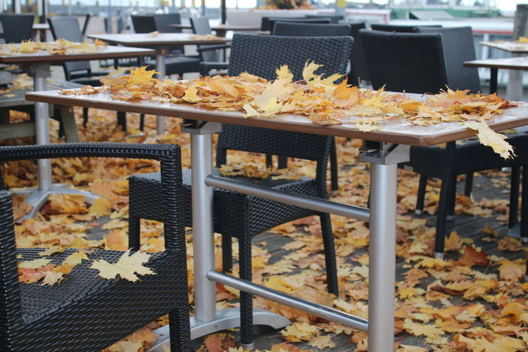Autumn Bodensee City Day Freshness No People Outdoors Table