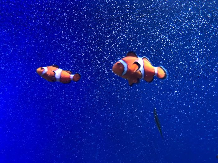 Low angle view of clown fish swimming in sea
